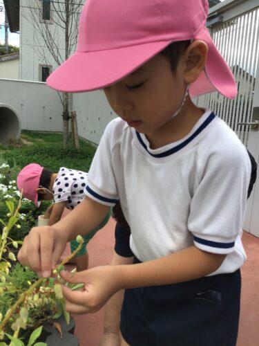 園庭あそび
